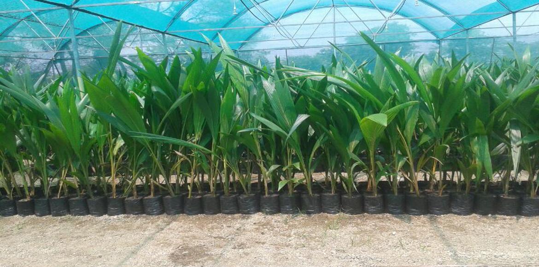 Landscape consultant horticulturist nursery man greenvilla for Garden consultant